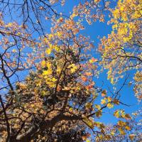 どんぐりの森から見える青い空