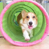 12月の【わんこ整体】スケジュールです(*^-^*)  犬のしつけ教室@アロハドギー