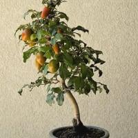 秋の実物盆栽と花台