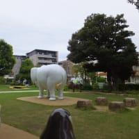 「没後50年 坂本繁二郎展」を練馬区立美術館に見に行く。   その1