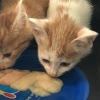 母と兄妹1命を亡くした子猫兄妹