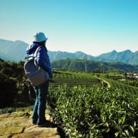 2018嘉義阿里山旅遊景點推薦|嘉義阿里山步道×在地體驗×美食