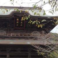 久しぶりに鎌倉。
