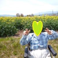 菜の花畑へ