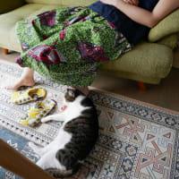 ネコの制圧術