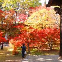 信州・大町の霊松寺へ紅葉を・・・・・・!(追加画像も!)