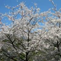 桜の園~その2
