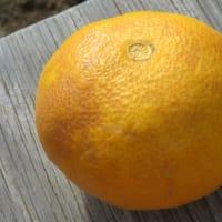 黄色い収穫!最高の長湯のために!