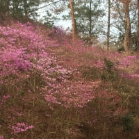桜の時期     雑感
