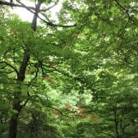 観音沢沿いの森で