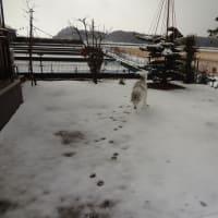 初雪♪雪遊び~~