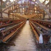 『大地といのちの会』~三角養鶏場の視察に参加