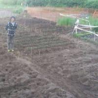 畑、3年め・・・