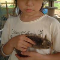 2011/3/28 府中市でふれあい動物イベントを開催します。
