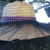 自宅のベランダ 蜂の巣・・・駆除