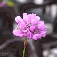 アルメリア  - 絵画風