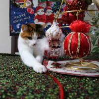 クリスマスのお手伝いにゃの。