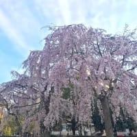 sakuraの時間