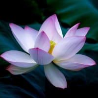ILCHI希望の手紙 今日咲かせた花