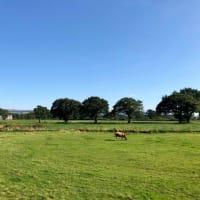 渓谷の遊歩道を通ってたどり着いた住宅街の中の放牧場、ウシを眺めて癒される。