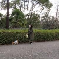 於大公園の花 : パンジー・・・風も無く穏やかな朝になり、多くの子供たちが遊んでいました。