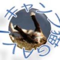 三毛猫ボタン●GAVI