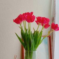 4月現代霊気セミナーのお知らせ レベル1・3