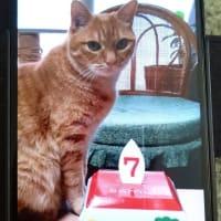 ダイちゃん7歳の誕生日😺🎵