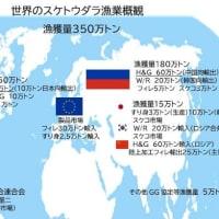 スケトウダラ国際市場動向 ロシア産冷凍製品 中国加工 EU市場