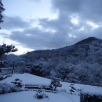 冬山の桜を見る会