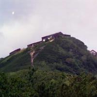 イブキトラノオ(燕山荘前の南斜面)