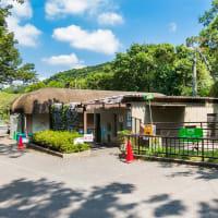 日本平動物園 マレーバク【ナナハ誕生から1年】