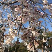 OTOTOMO LIVE延期のお知らせ