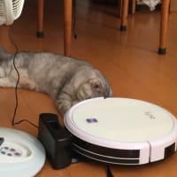 猫とロボット掃除機  ルンバに乗る猫ちゃんの動画みたいに?