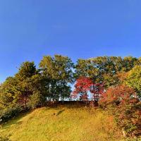 北海道移住 朝晩だいぶ寒くなりまして葉っぱも色づき・・・