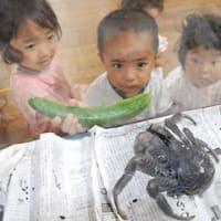 ヤシガニ、園児の人気者 南城市のあおぞら保育園に珍客