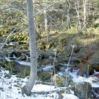 湧別川水系、最源流、初冬のオショロコマ  その弐