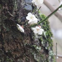 春動き出し