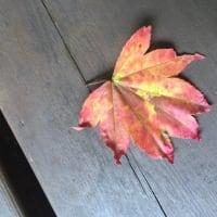 午後の森に早や降りる秋の印。