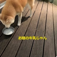 11月24日(火)ちゃんとちゃんぽん・千代の食事