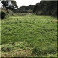 雑草との戦い開始