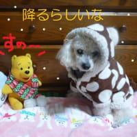 東京雪降る? そして積もる?? ( ▽   )サー