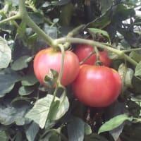 広島・緑井の市民農園で農業体験してみませんか?