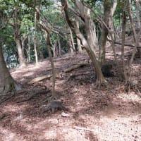 ヤクシマザルの遊びまわる姿に癒された!【屋久島世界自然遺産の森あるきガイドツアー】