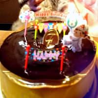 愛する猫 小夏の8歳の誕生日