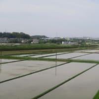 東海道新幹線は豊橋と名古屋駅に入線するN700系新幹線(2019年5月)
