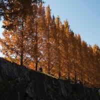 ムーミンの森の秋。