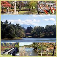 紅葉期を迎えてる野木和公園
