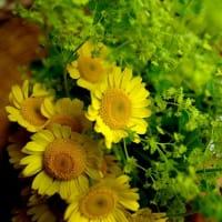 Plant Medicineリトリート~植物の色とかたち~