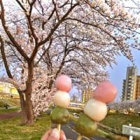Cherry blossoms!!!